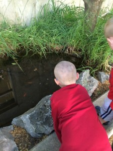 Looking at fish in a tiny pond.
